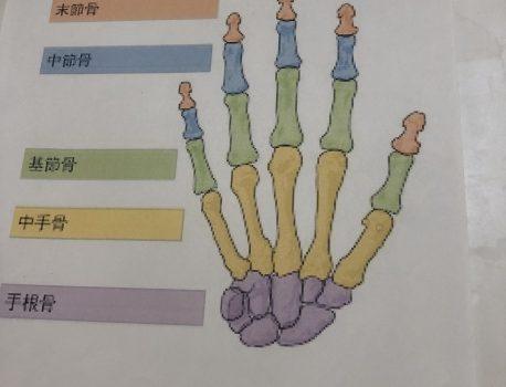 眼科疲労 首、肩凝り改善 手の中にある骨を動かす